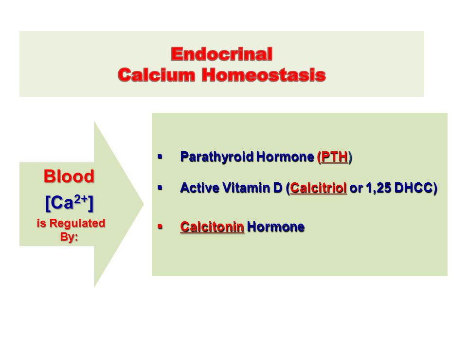 Blood [Ca2+] Endocrinal Calcium Homeostasis Parathyroid Hormone (PTH)